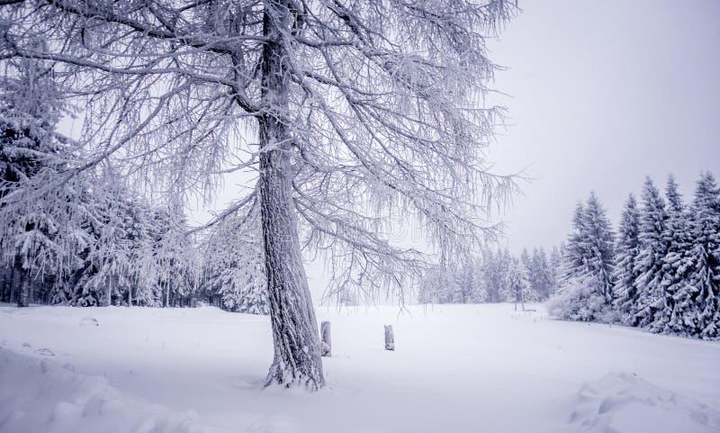 Árvore congelada no campo do inverno imagens de stock