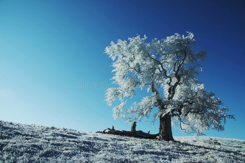 Árvore congelada sozinha foto de stock royalty free
