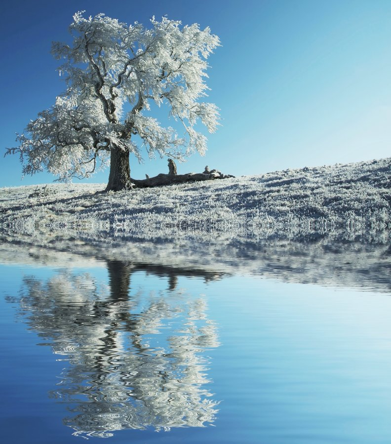 Árvore congelada sozinha imagens de stock royalty free