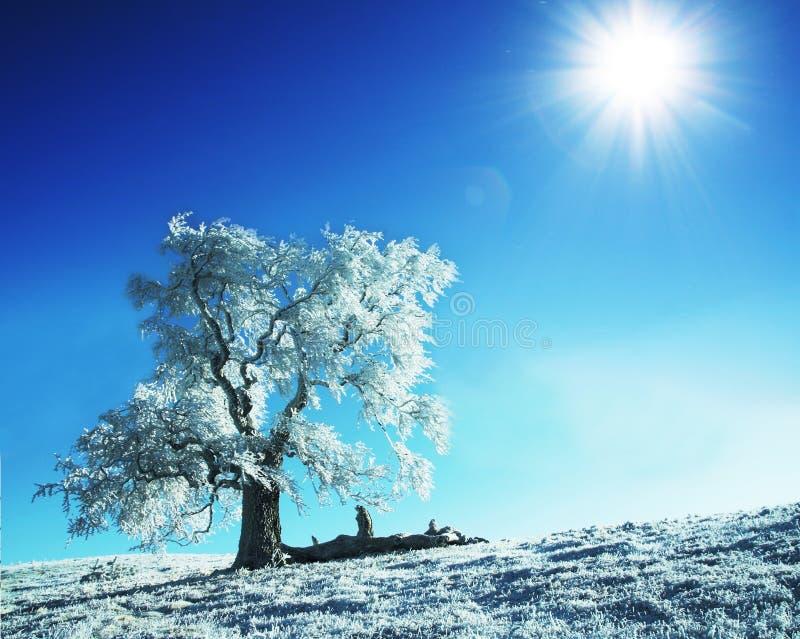 Árvore congelada sozinha fotografia de stock