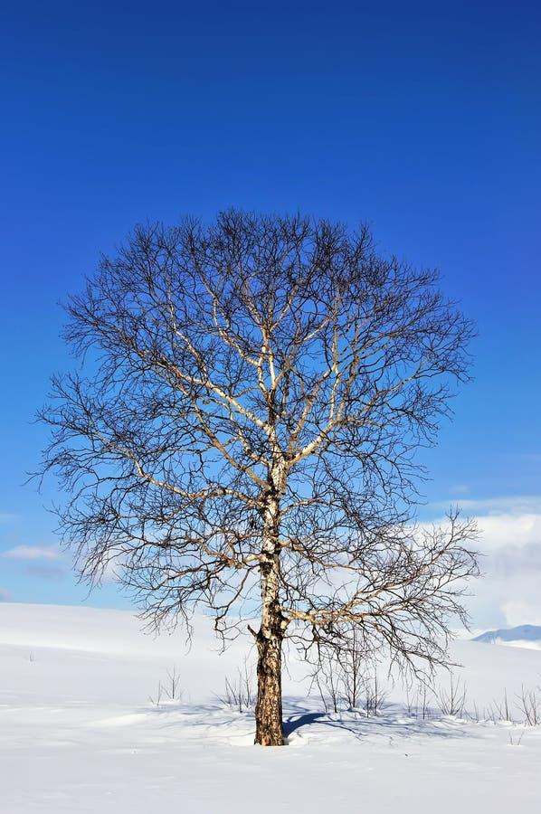 Árvore congelada sozinha no campo imagens de stock royalty free
