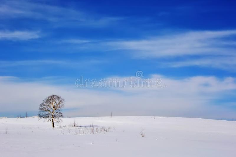 Árvore congelada sozinha no campo do inverno foto de stock royalty free
