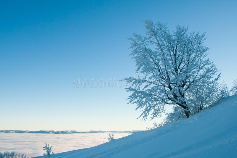 Árvore congelada sozinha no campo do inverno e céu azul com nuvens raras fotos de stock