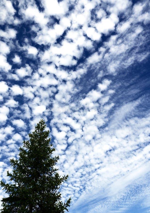 Árvore contra o céu, nuvens íngremes cobertas foto de stock