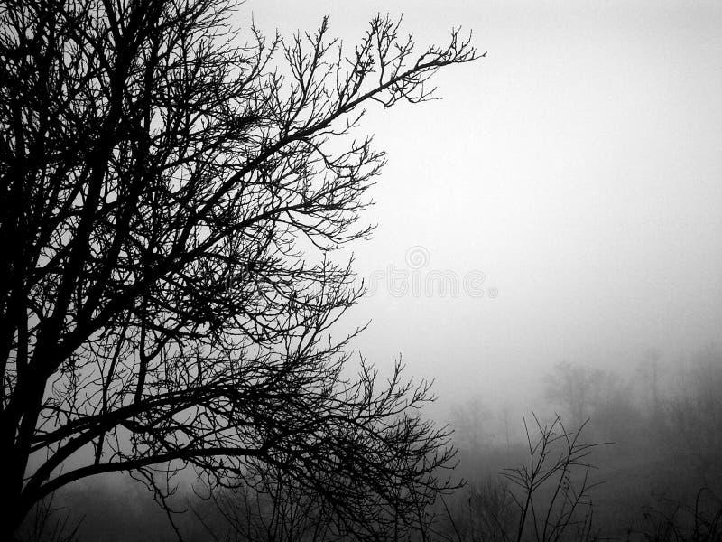 A árvore contra Tempo imagem de stock