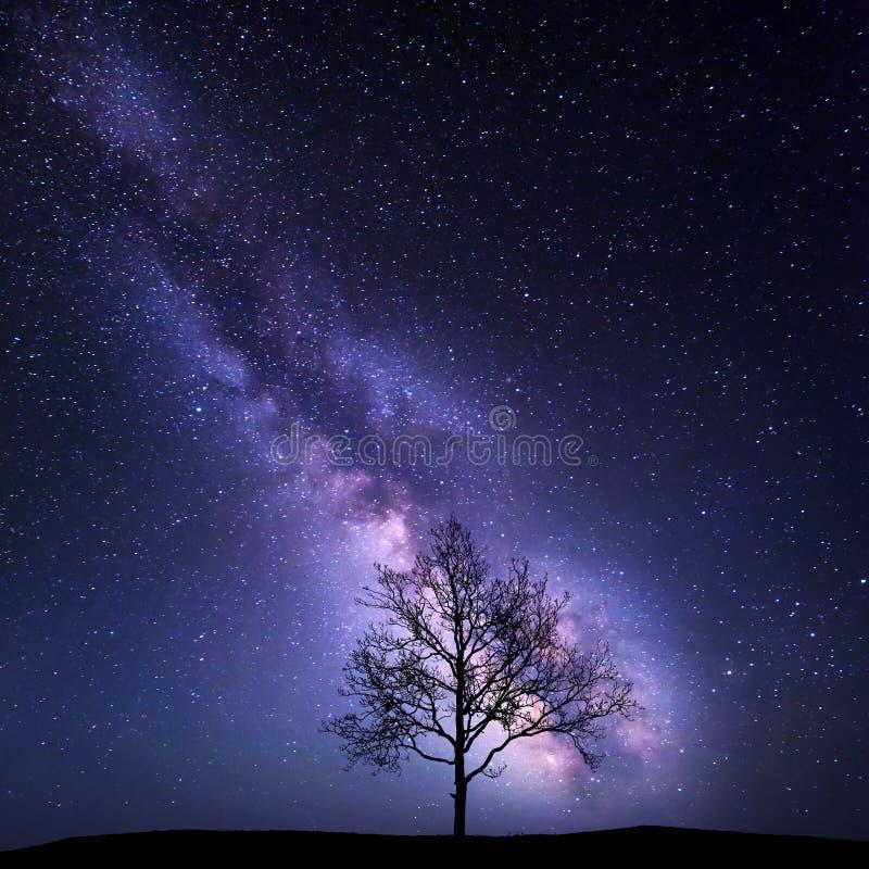 Árvore contra a Via Látea Paisagem da noite foto de stock