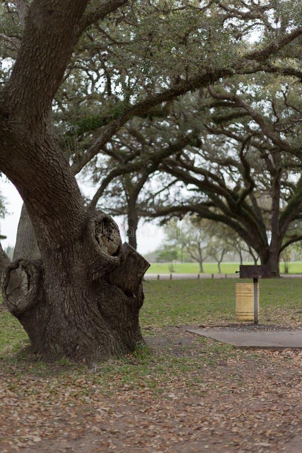 Árvore corajosa fotografia de stock royalty free
