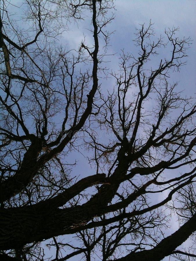 Árvore Craggy do inverno imagens de stock royalty free