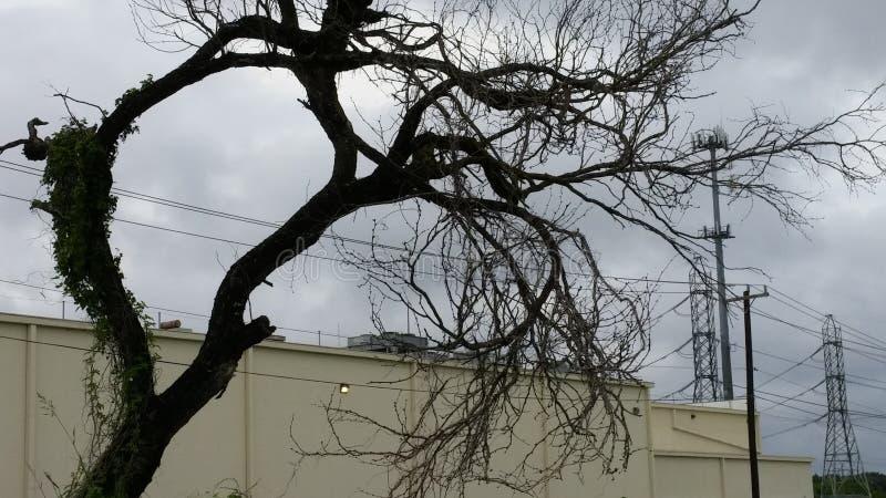 Árvore Craggy no céu do inverno, dobrado e sulcado em Texas sul fotos de stock