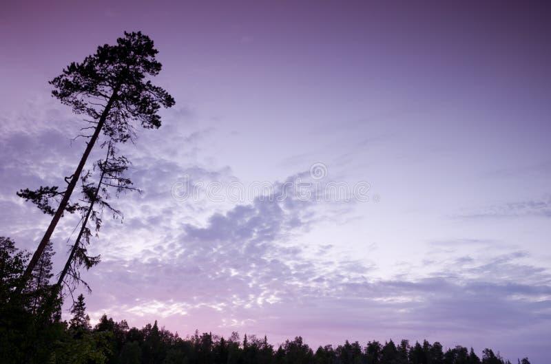 Download Árvore crepuscular foto de stock. Imagem de tranquil - 16867420