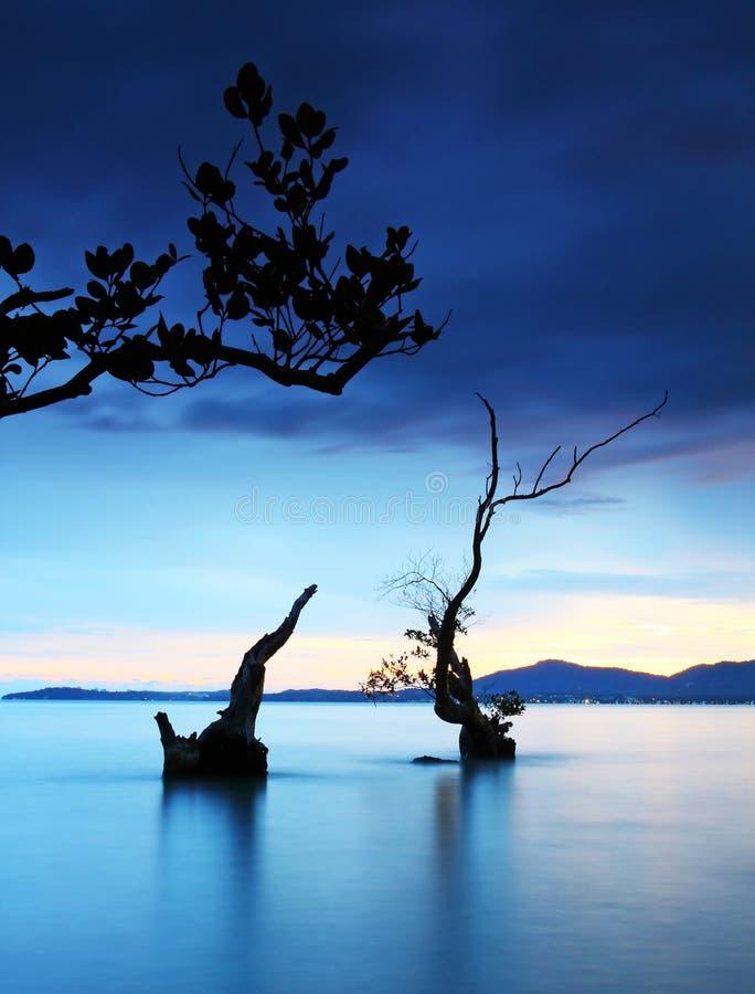 Árvore crepuscular e inoperante no mar fotografia de stock royalty free