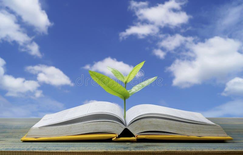 A árvore cresce acima do livro com a luz que brilha como a obtenção do conhecimento no fundo do céu azul, conceito porque o papel fotos de stock royalty free