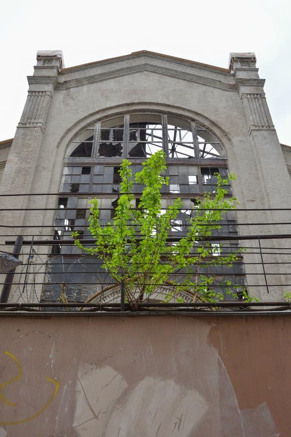 A árvore cresce no fundo de uma fábrica abandonada imagens de stock