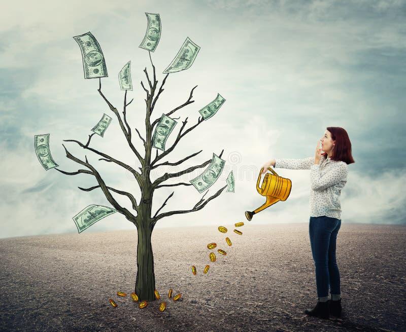 Árvore crescente do dinheiro imagens de stock royalty free