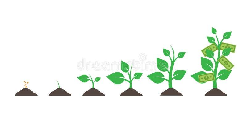 Árvore crescente do dinheiro Isolado no fundo branco Ilustração do vetor EPS ilustração do vetor