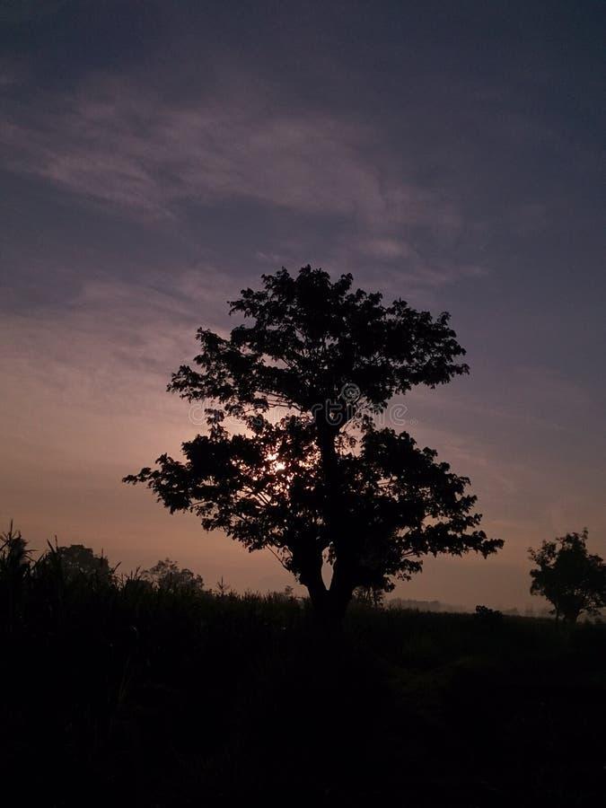 Árvore crescente e dia de Gogreen imagens de stock royalty free