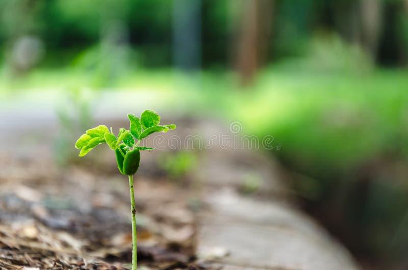 Árvore crescente minúscula fotografia de stock royalty free