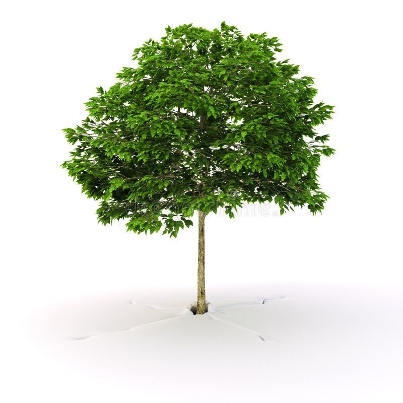 Árvore crescida ilustração do vetor