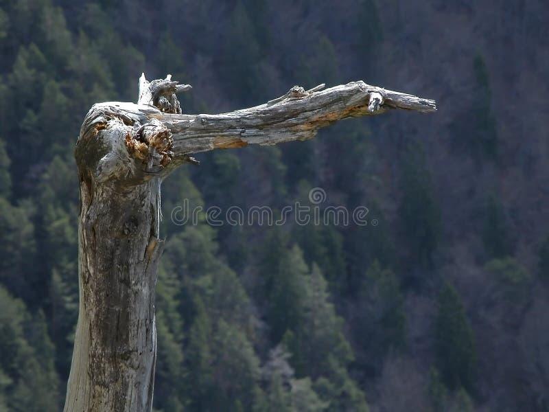 Árvore curvada áspera fotografia de stock royalty free