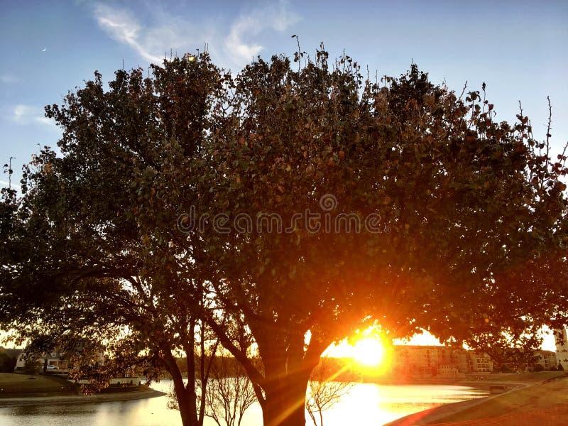 A árvore da ação de graças imagem de stock royalty free