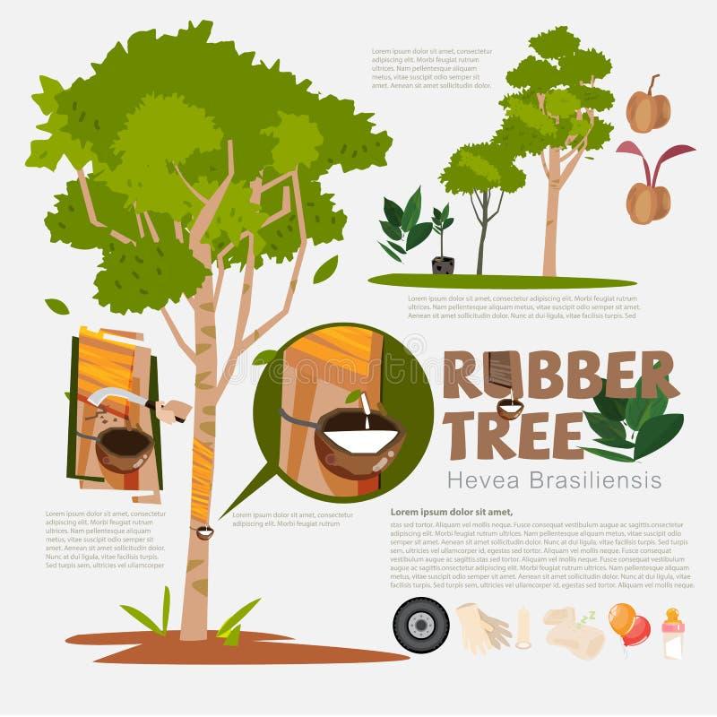 Árvore da borracha ou brasiliensis da hévea com os elemen infographic do detalhe ilustração stock