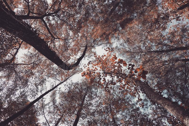 Árvore da estação do baixo ângulo em uma floresta fotos de stock