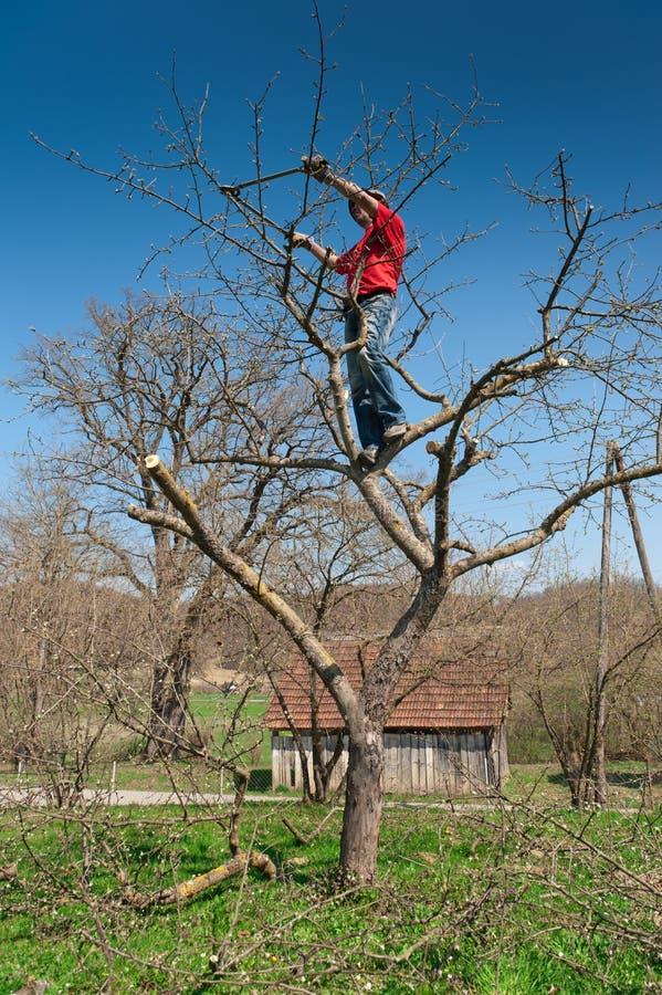 Árvore da estaca do jardineiro com tosquiadeiras imagens de stock royalty free