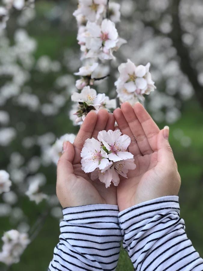 Árvore da flor foto de stock