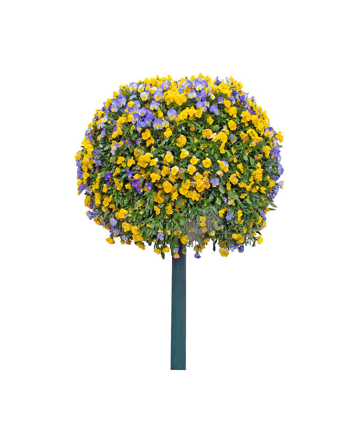 Árvore da flor do amor perfeito isolada fotos de stock