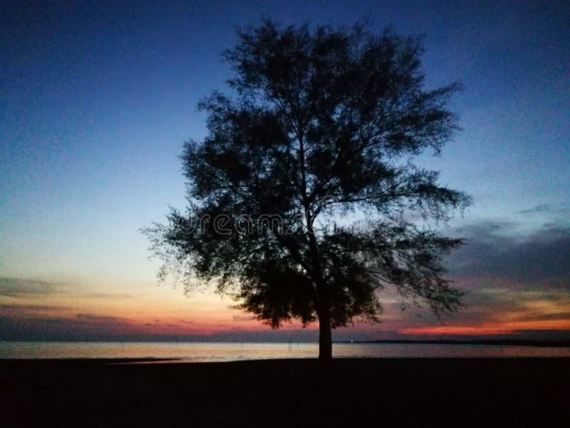 Árvore da glória na noite imagem de stock royalty free