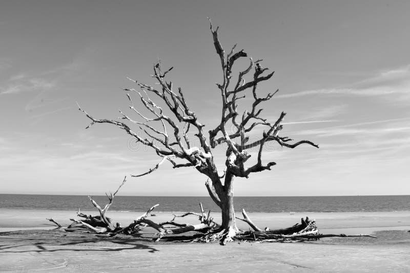 Árvore da madeira lançada à costa na areia imagem de stock royalty free