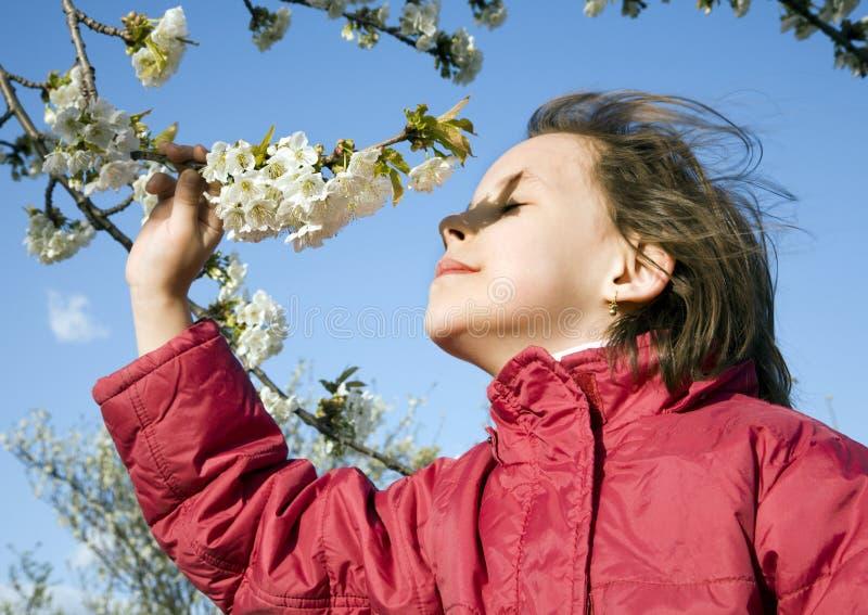 Árvore da menina e de cereja fotos de stock