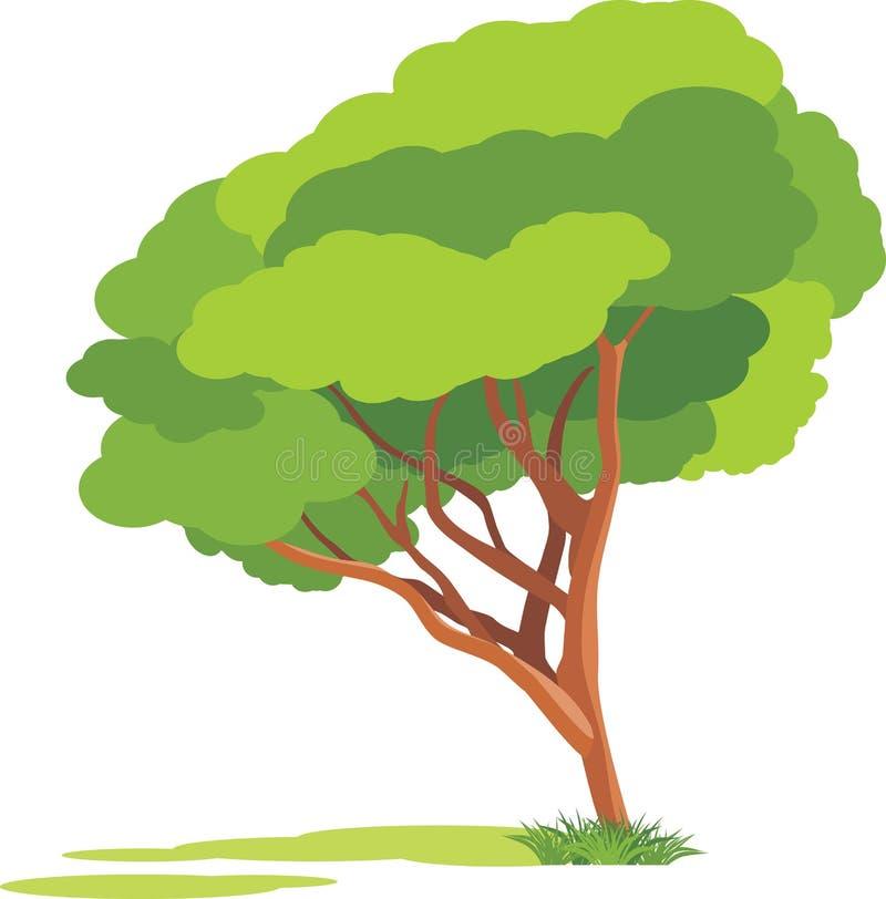 Árvore da mola isolada no fundo branco ilustração royalty free
