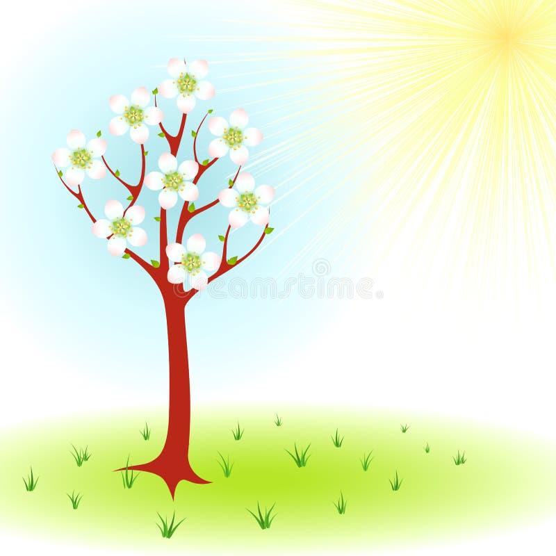 Download Árvore da mola ilustração do vetor. Ilustração de grama - 29843071