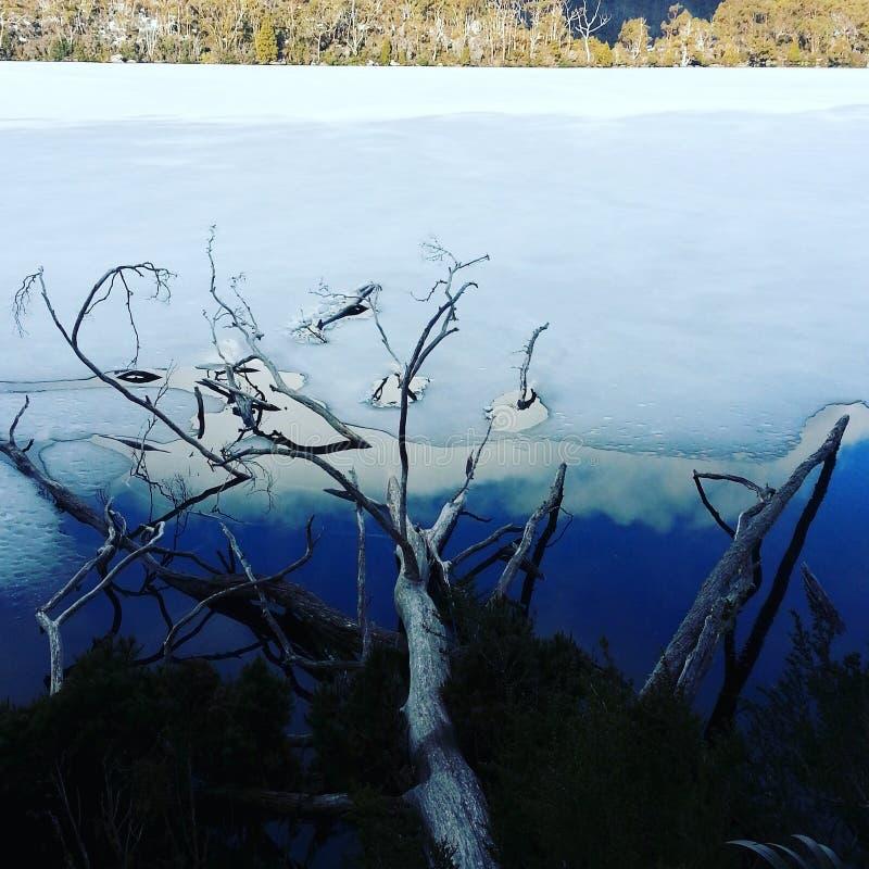 Árvore da morte no lago congelado foto de stock