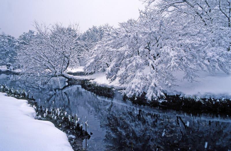 Árvore da neve foto de stock royalty free