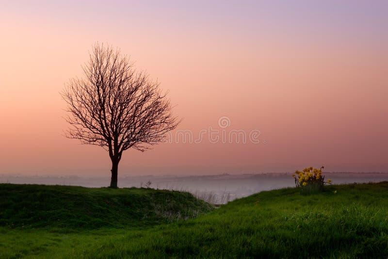 Árvore da noite fotos de stock