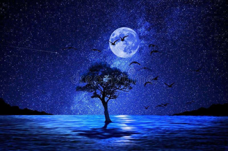 Árvore da noite no lago e na lua imagens de stock