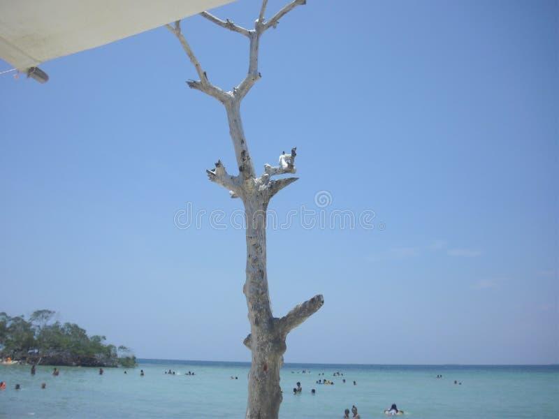 Árvore da praia fotos de stock royalty free