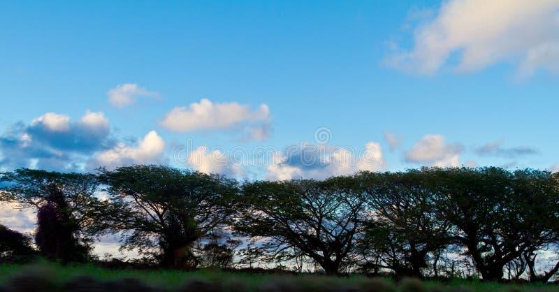 Árvore da praia em Maui imagens de stock royalty free