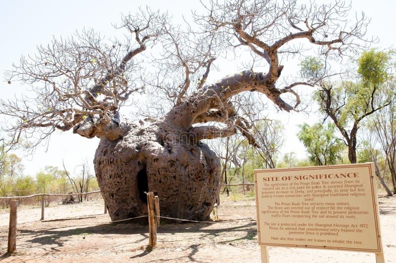 Árvore da prisão de Boab - Kimberley - Austrália imagens de stock royalty free