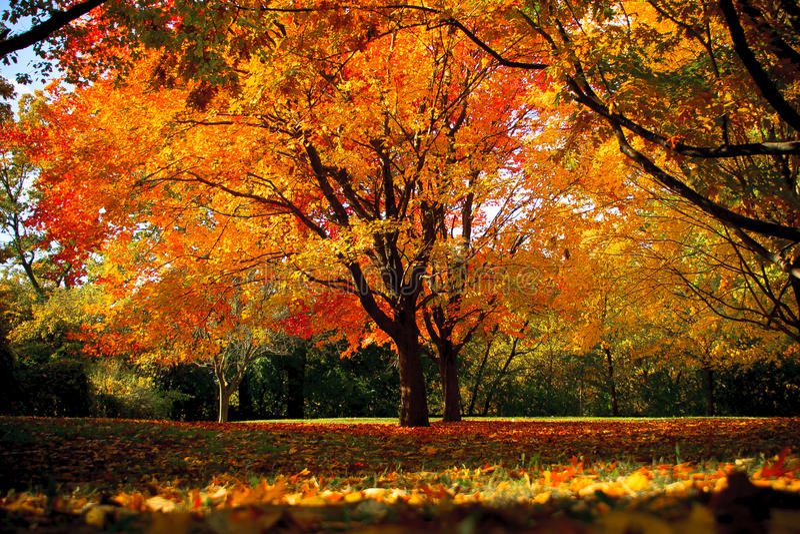 Árvore da queda no parque elevado imagens de stock royalty free