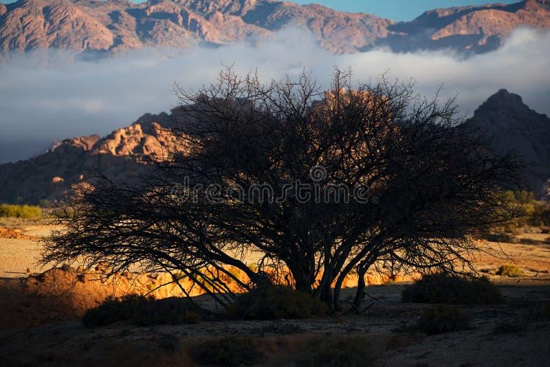 Árvore da silhueta em Tafraout, Marrocos fotografia de stock