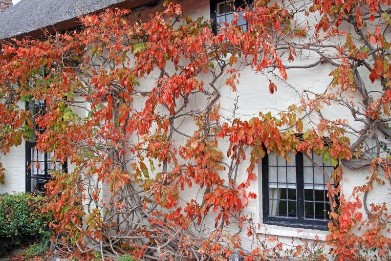 Árvore da videira da casa de campo de Kent fotos de stock