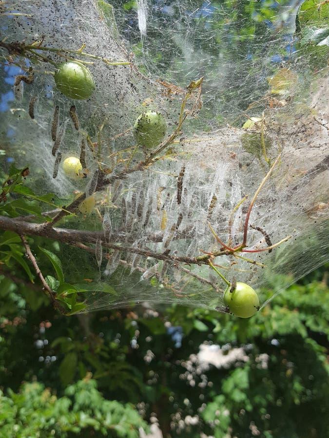 Árvore da Web de aranha imagens de stock