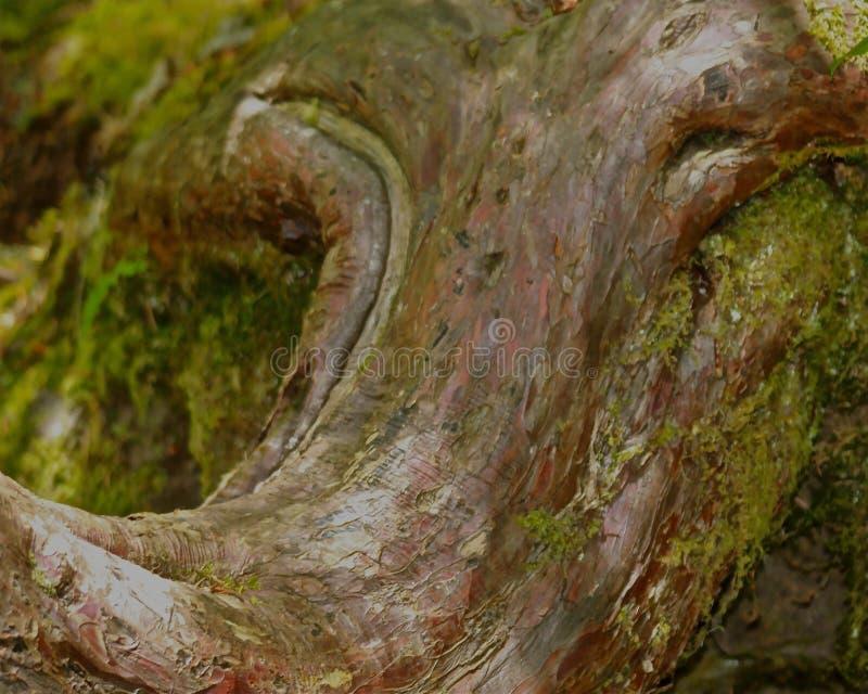 Árvore dada forma como a cabeça do elefante imagens de stock royalty free