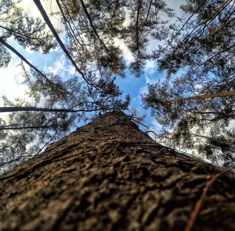 A árvore das alturas fotos de stock