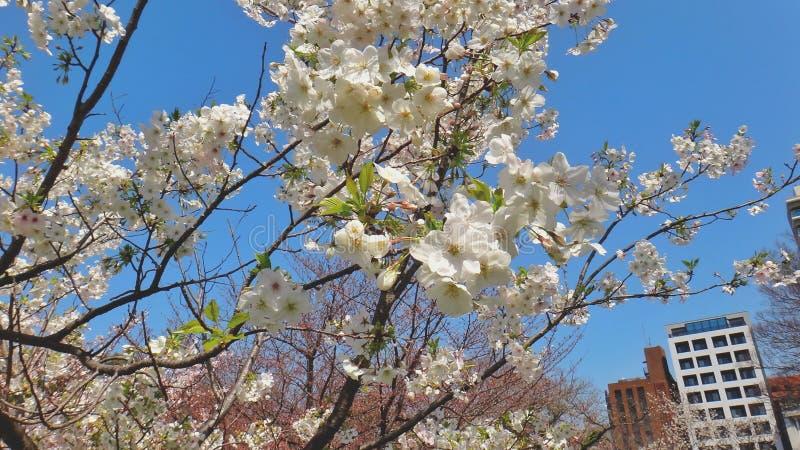 Árvore das flores em um parque foto de stock