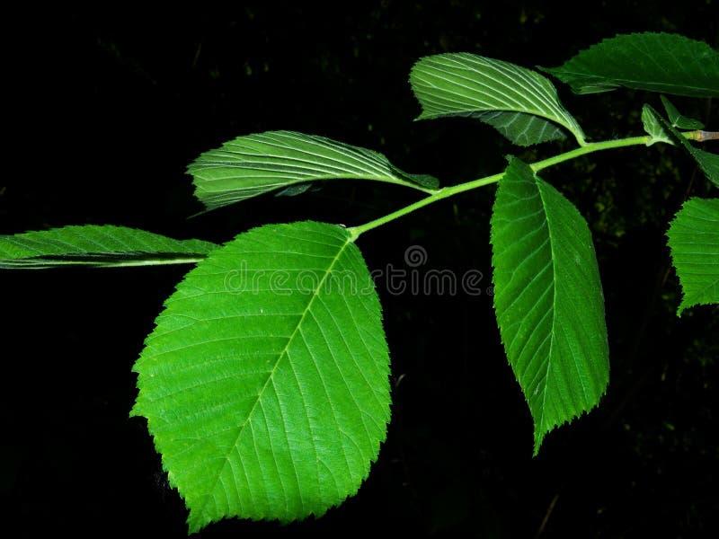 Árvore das folhas das texturas imagens de stock