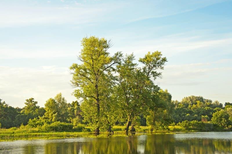 Árvore de álamo sobre o lago fotos de stock royalty free